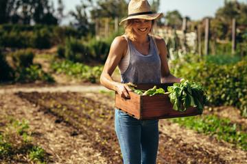 Farmer with freshly harvested vegetables in garden Wall mural