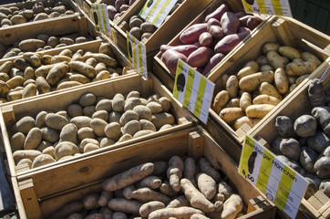 Kartoffeln Kartoffel Auswahl Angebot Viktalienmarkt München Sorten Kartoffelsorten verschiedene