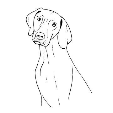 Hund Illustration