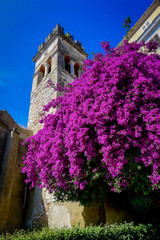 Wall Murals Eastern Europe Beautiful bright magenta purple bougainvillea flowers cascade down the side of a stone tower in the UNESCO listed old town of Corfu, in the Greek Ionian Islands in the Mediterranean Sea