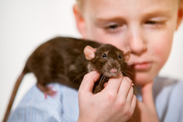 Boy 6 years old with a domestic rat at home