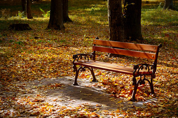 Beautiful garden bench in autumn park illuminated by sun.