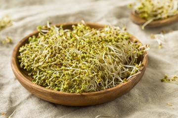 Raw Green Organic Clover Alfalfa Sprouts