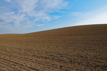 Abgeerntetes Feld bei Altkünkendorf (Uckermark)