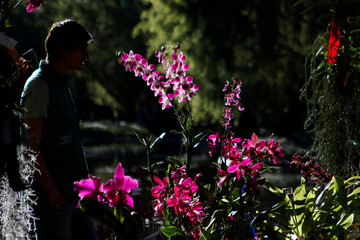 A man looks orchids during the National Orchid Exhibition at the Jose Celestino Mutis Botanical Garden in Bogota