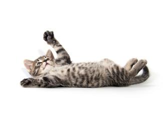 Cute tabby kitten on white Fototapete