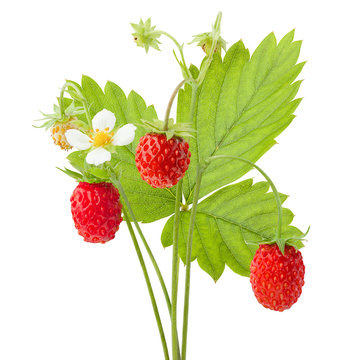 6312648 Wild strawberry isolated on white background, clipping path, full depth of field
