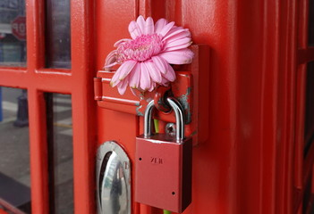 Flower on British Telephone booth