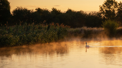 Beautiful dawn landscape image of River Thames at Lechlade-on-Thames in English Cotswolds countryside with swan in misty river Wall mural