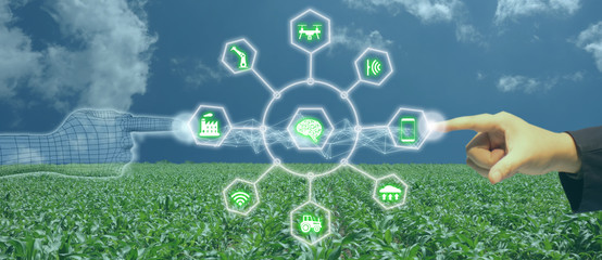 Wall Mural - iot, internet of things, agriculture concept, Smart Robotic (artificial intelligence/ ai) use for management , control , monitoring, and detect with the sensor in the farm, field.