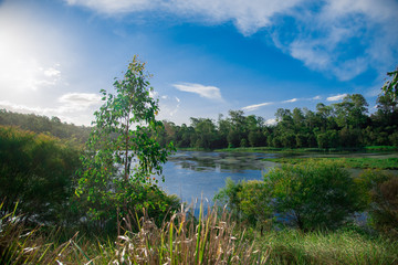 Pond nearby Brisbane city in Queensland, Australia. Australia is a continent located in the south part of the earth.