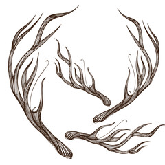 Hand drawn deer antlers. Vector illustration isolated on white background.