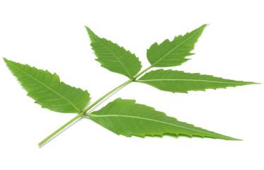 Medicinal herbal Neem leaves have properties of medicine
