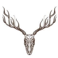 Sketch of deer skull.