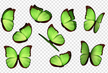 Butterfly vector. Green isolated butterflies. Insects with bright coloring on transparent background