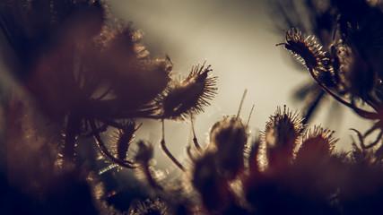 Contre jour sur plantes d'été au coucher de soleil