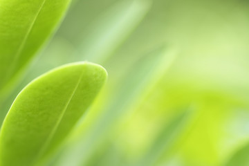 The beauty of nature leaves green blur. In the spring Under the morning light. Use as background and wallpapers.