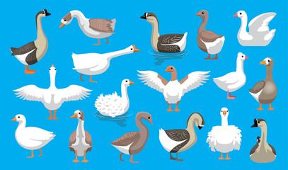 Various Cute Geese Breeds Cartoon Vector Characters