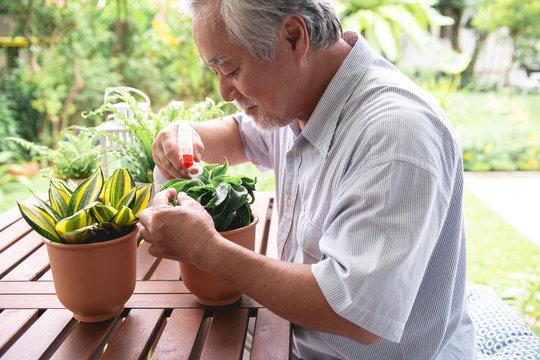 Senior man watering plant in garden on wooden table.