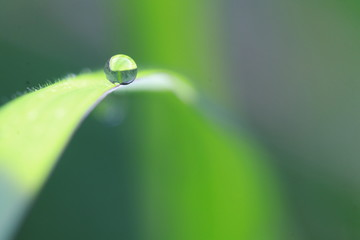 Close up dew drop on grass leaf in the morning