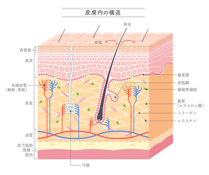 Structure in the skin_Japanese notation