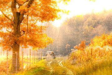 Beautiful autumn nature scene, peaceful, chill, golden light