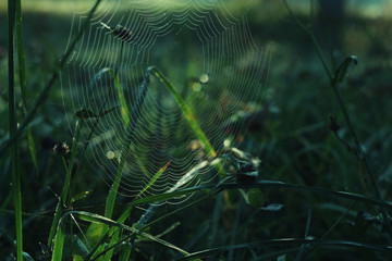 autumn meadow with spiderweb on the dry grass/dewy meadow