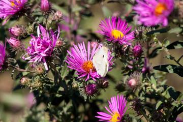 осенние цветы 8
