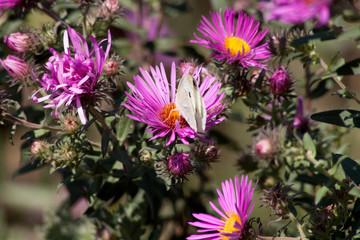 осенние цветы 6