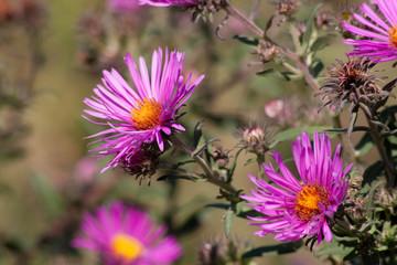 осенние цветы 5