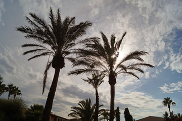 palm trees on a background of blue sky