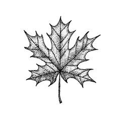 Dotwork Maple Leaf