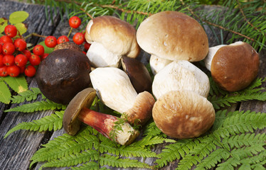 Mushrooms, Pilze, Steinpilze, Textraum, copy space