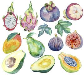 Set of watercolor exotic fruits: dragon fruit, papaya, fig, mangosteen, avocado, papaya, mango.