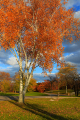 Colorful autumn tree in the park
