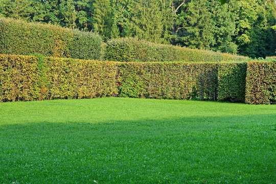 corner of a large lawn with a neatly trimmed green grass fenced hedge against the trees in a beautiful city garden on a Sunny summer day