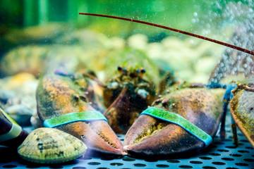 Colorful crawfish for sale, sea crustaceans inside aquarium in a restaurant