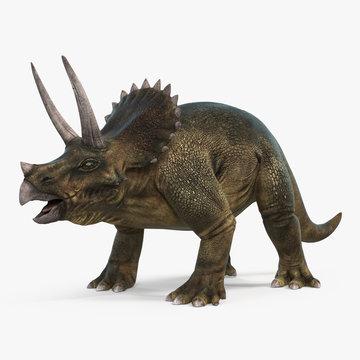Triceratops dinosaur on bright background. 3D illustration