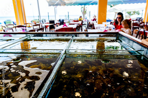 Fresh seafood for sale inside of divided aquarium in a restaurant