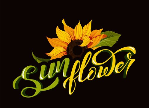Sunflower vector clip art with hand lettering sign calligraphy flower name yellow autumn botany illustrations