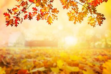 Colorful autumn sunset background