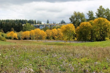 A panoramic view of fall color trees with flowers blooming in a meadow