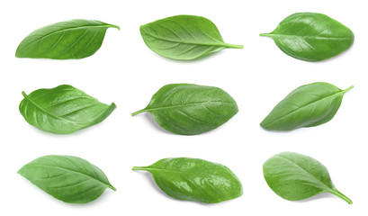 Wall Murals Spices Set with green fresh basil leaves on white background