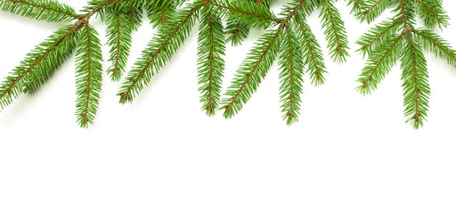 Nature Template with fresh fir tree on white background