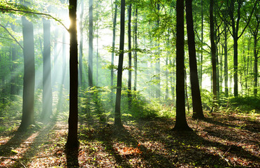 Wall Murals Forest Morning in the forest