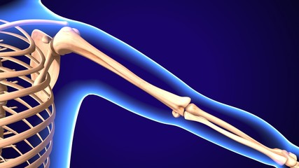 3D Illustration of Human Body Bone Joint Pains Anatomy (Scapula)