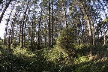 Wide angle landscape of forest