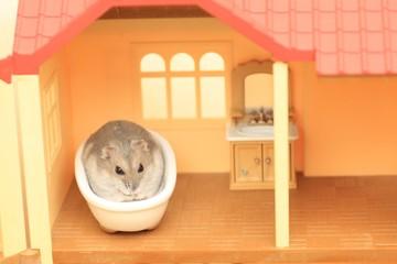 ハムスターのお風呂