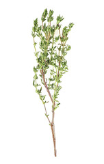 Thyme fresh herb isolated on a white background