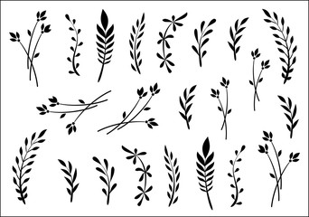 Collection of herbs and leaves, drawn by hand, sketch
